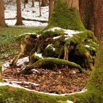 Wald Salzburger Land
