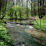 Frühlingsgrün in der Salzachau - Marianne Robl @mein.salzburg.com