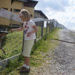 Ziegen füttern am Grafenberg