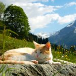 Auch die Katze genießt die Sonne
