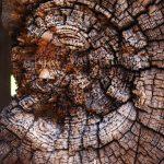 Ganz aus Holz