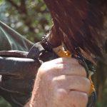 mit seinen Faengen kann der Steinalder bis zu 80 kg Griffkraft aufbringen
