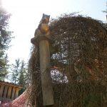 Das Eichhörnchennest mit der goldenen Nuss