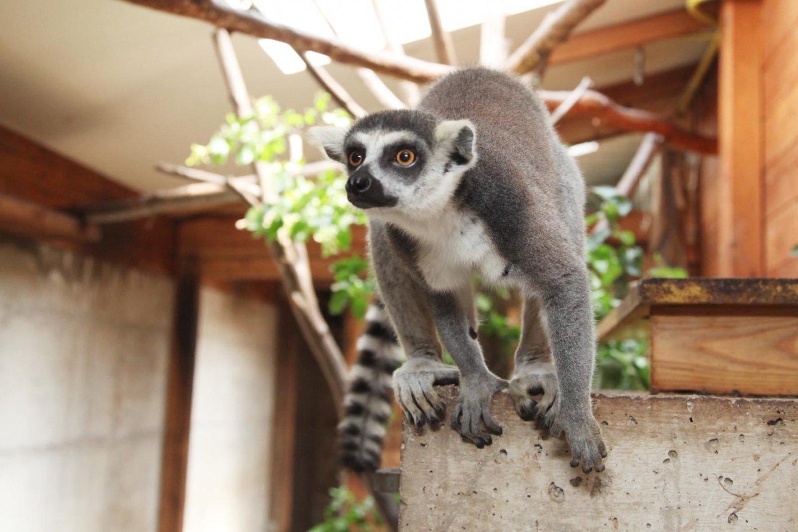 Besuch im Zoo Hellbrunn