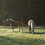 Auch die Pferde genießen die Morgenruhe