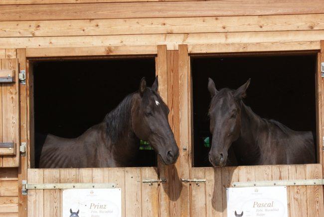 Prinz und Pascal begrüßen die Gäste