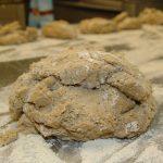 Der restliche Brotteig wird in 6 gleich grosse Teile geteilt.