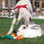 Ostern auf Gut Aiderbichl 2, (c) Doris Wild