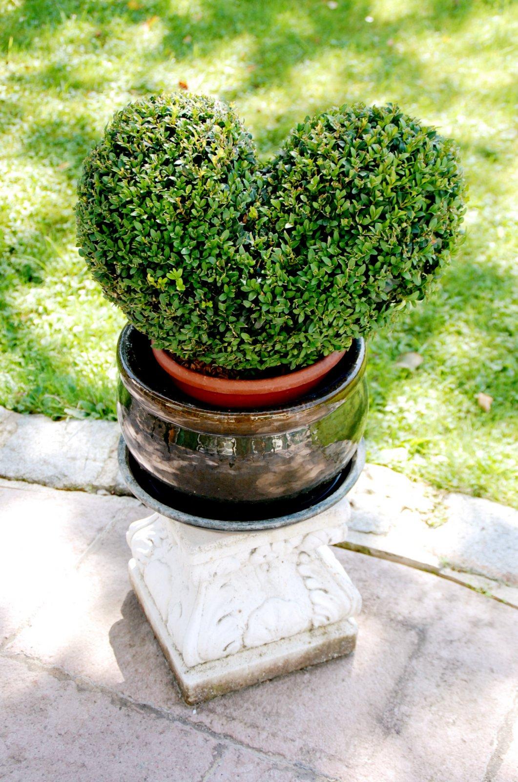 Der grüne Daumen kommt von grünem Herzen im Garten des Essigmanngutes