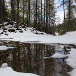 Alpine Urwaldlandschaft