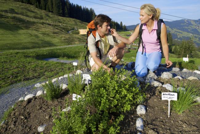 Der Kräuter- und Alpenblumenweg zeigt über 200 heimische Blumen und Kräuter.