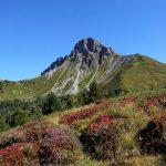 Aufstieg Richtung Filzmoossattel - die Natur zeigt sich schon herbstlich