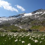 Der Übergang üppiger Natur in triste Hochgebirgslandschaft