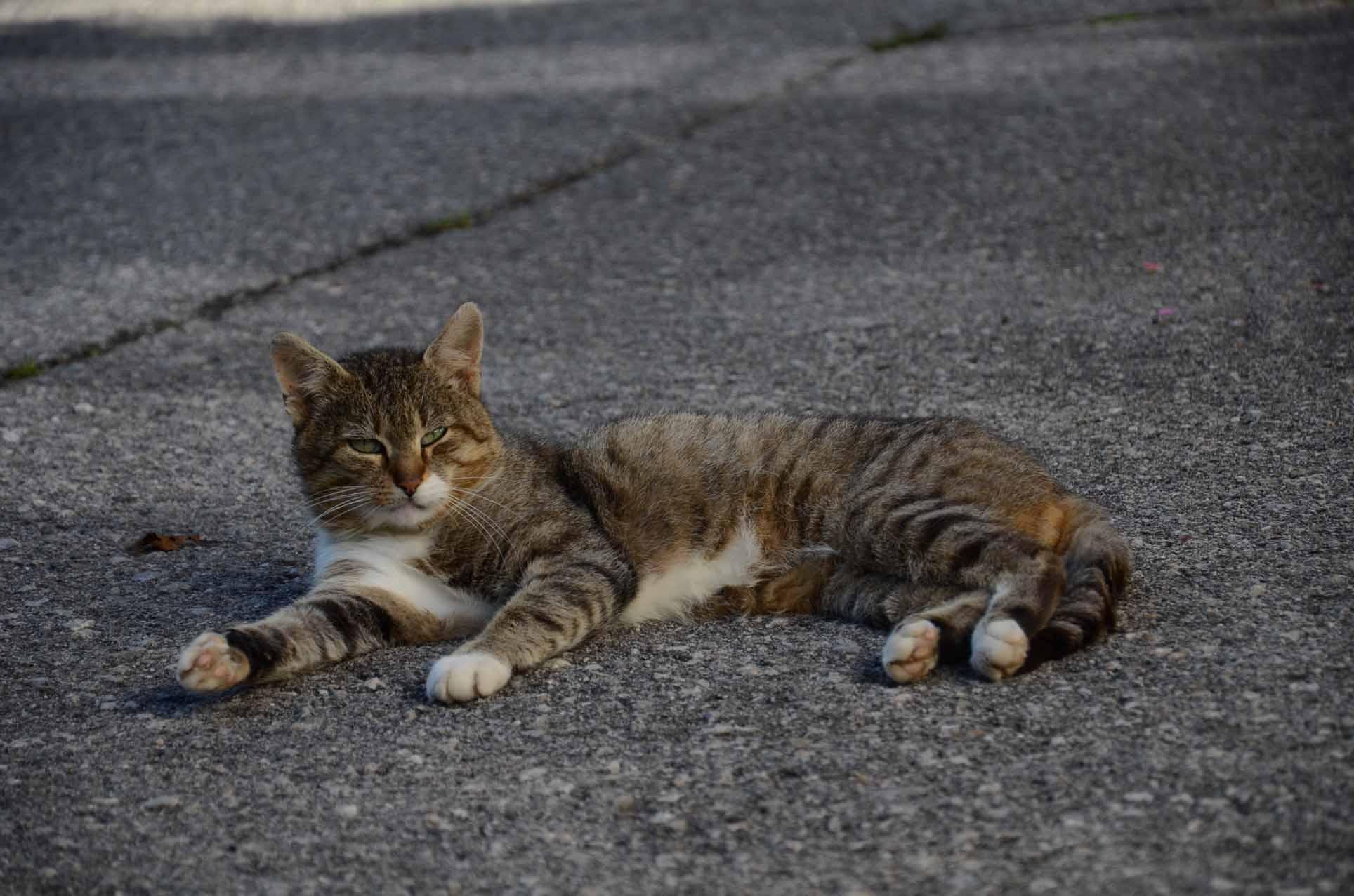 Katze Bitta genießt die Sonne