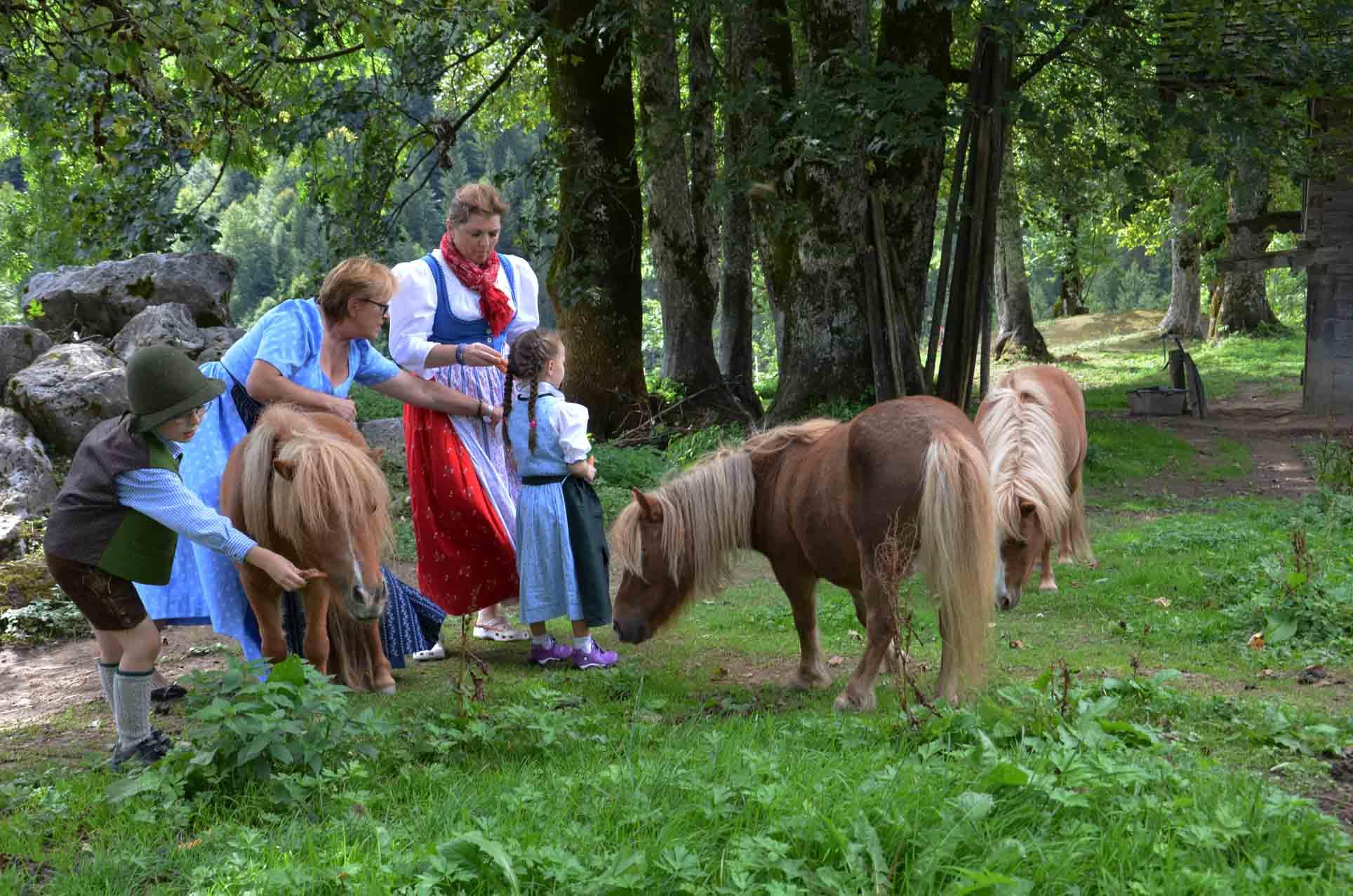 Die Ponys lieben Karotten