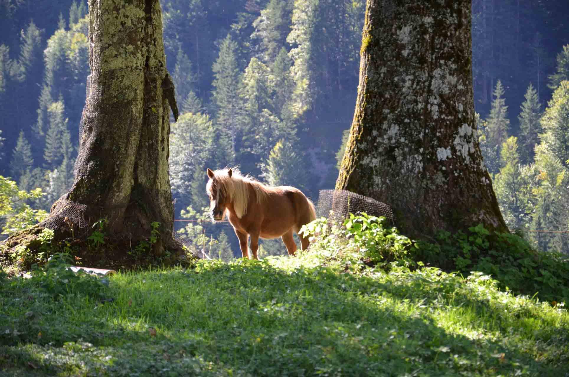 Pony Susi