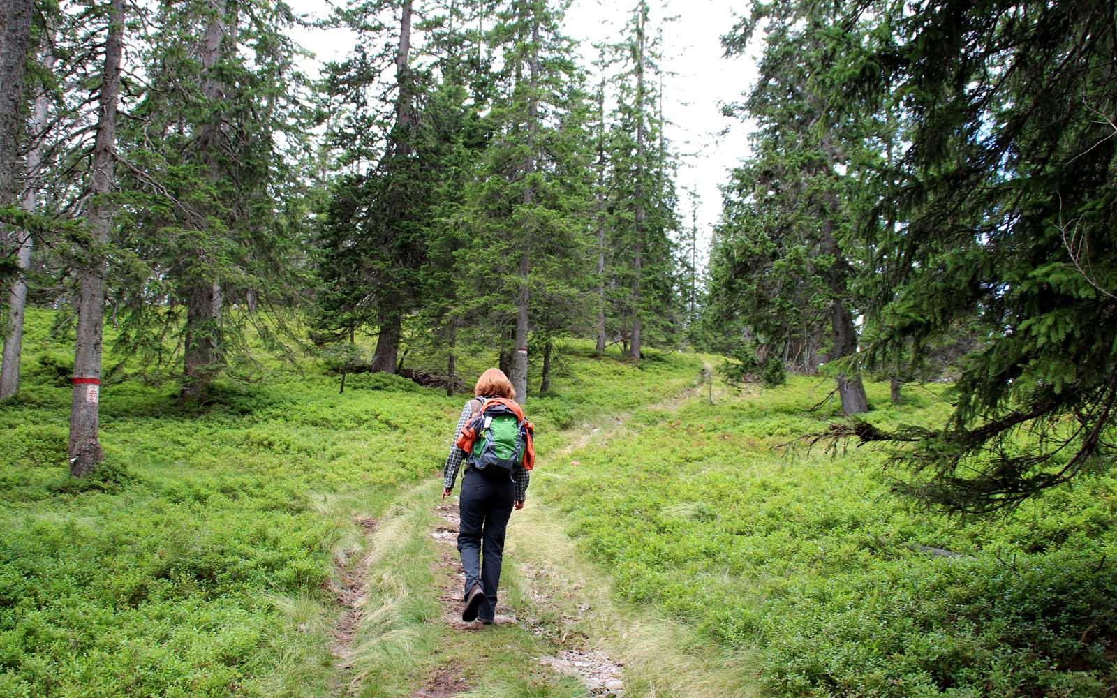 Märchenhaft anmutender Anstieg durch alten Fichtenwald