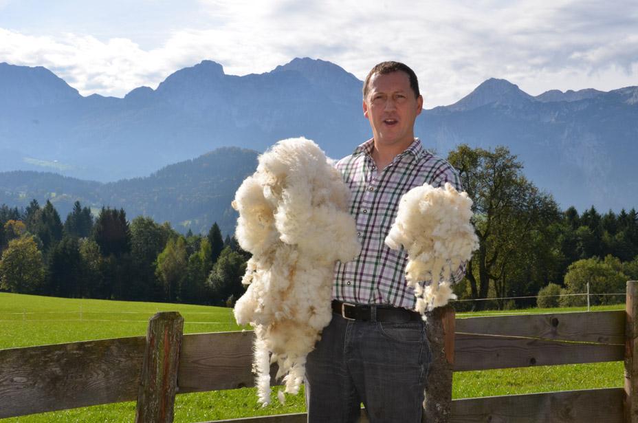 Wertvolle Schafwolle ...
