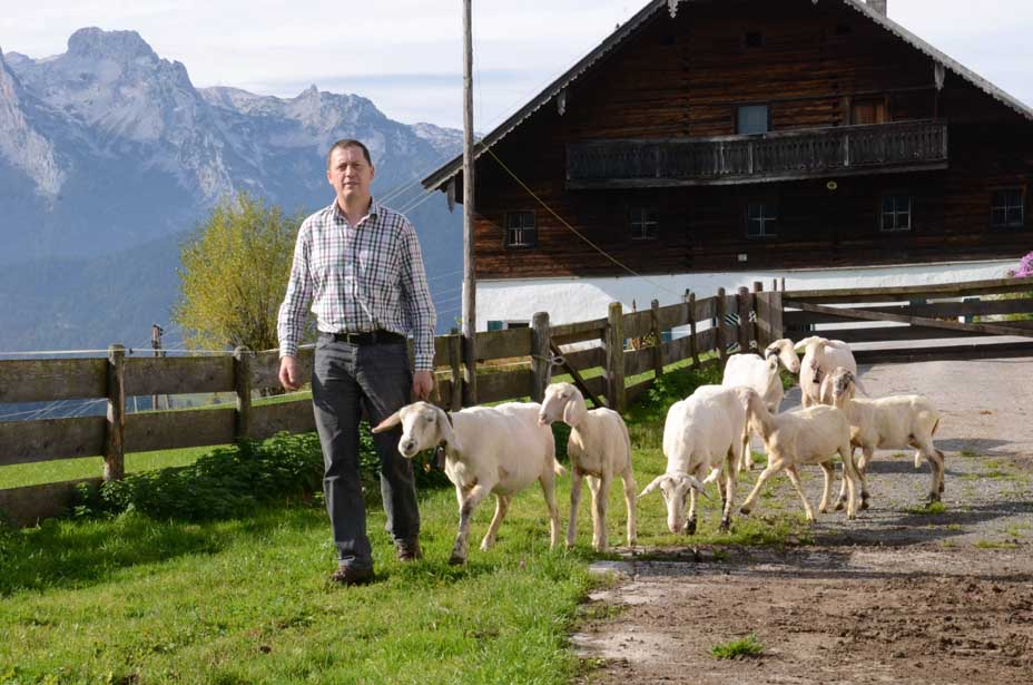 Die Schafe gehen auf die Weide.