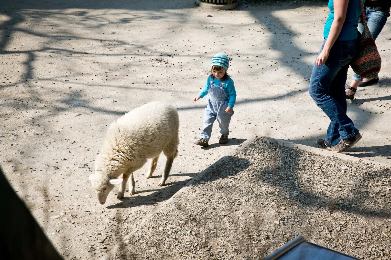 Der Streichelzoo bietet Spaß für Tier und Mensch