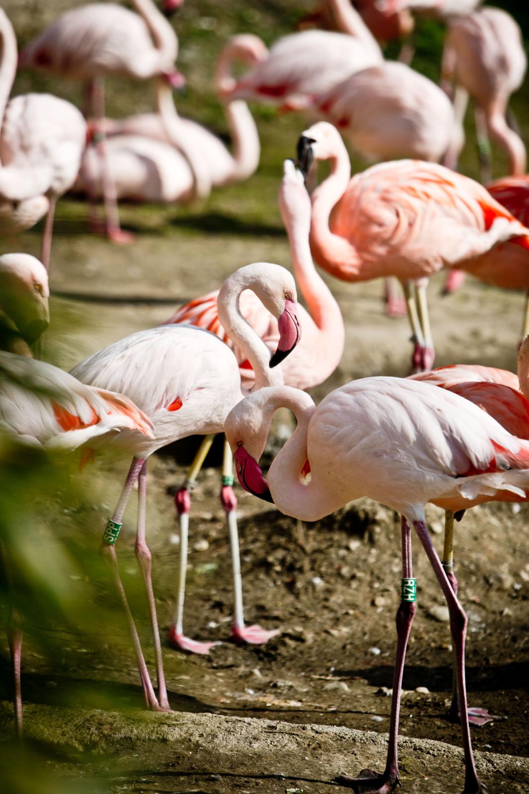 Der farbenfrohe Flamingo und Freunden