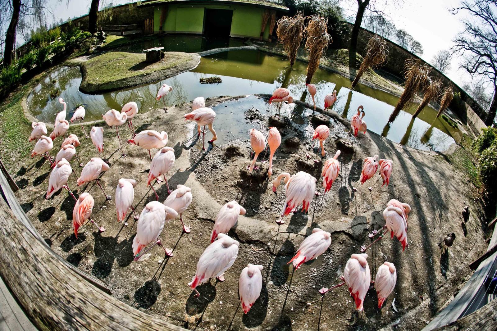 Die Flamingos bringen Farbe ins Leben