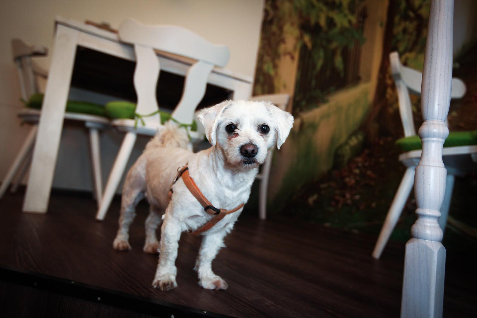 Ellie der Green Garden Hund