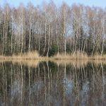 Bürmooser Moorsee.