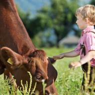 80 Pinzgauer Rinder sind am Saalhof beheimatet. c Saalhof