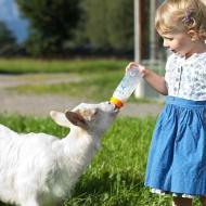 Auch Ziegen gehören zum Saalhof. c Saalhof