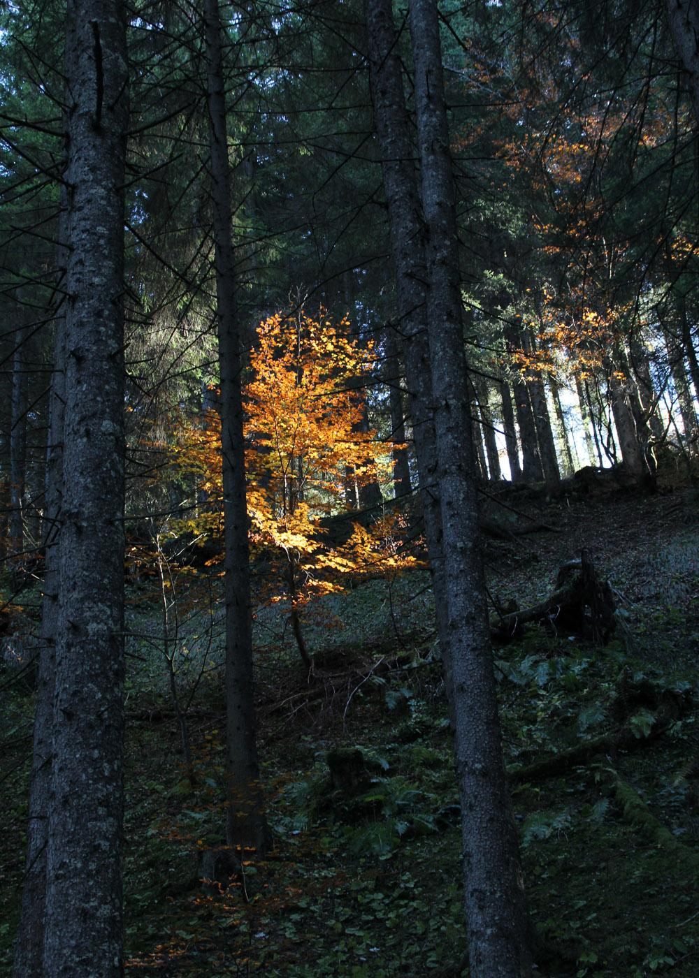 Abwechslungsreicher Anstieg im Wald