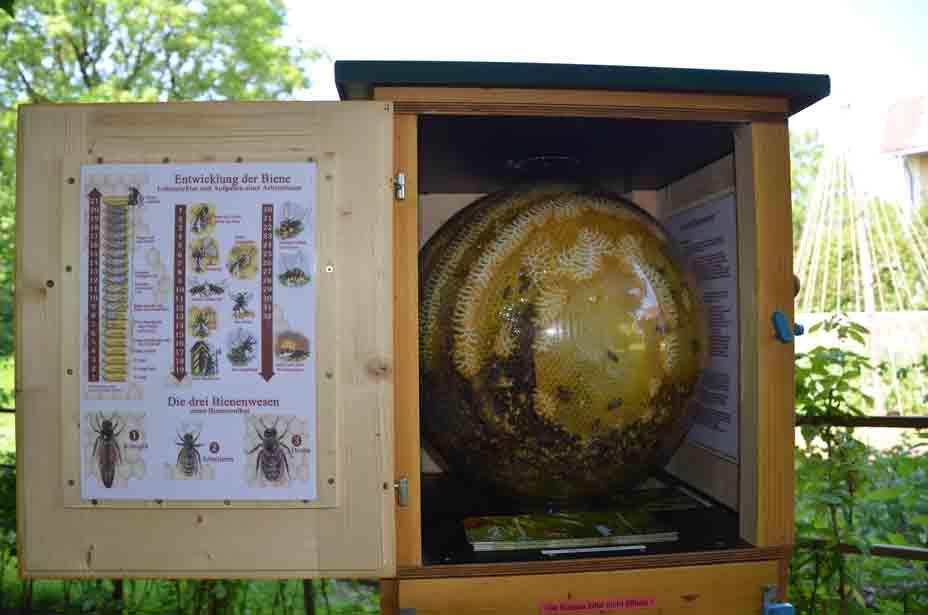 Bienentstock in der Glaskugel