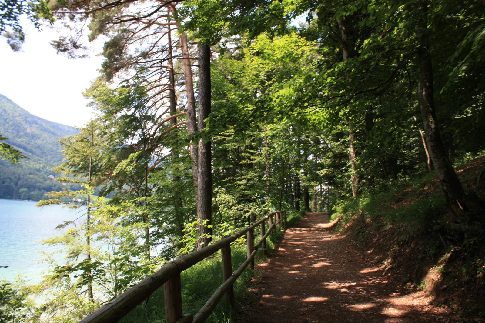 Der Weg führt durch den Wald...