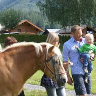 Die Pferde des Woferlguts können von den Gästen besucht werden.