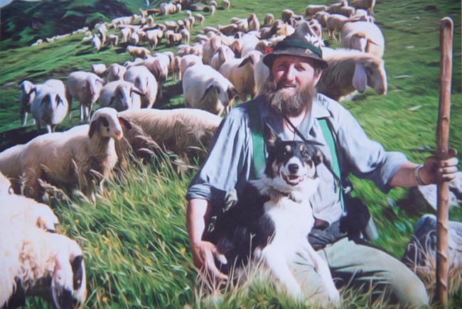 Da Schafe-Toni mit seiner Herde.