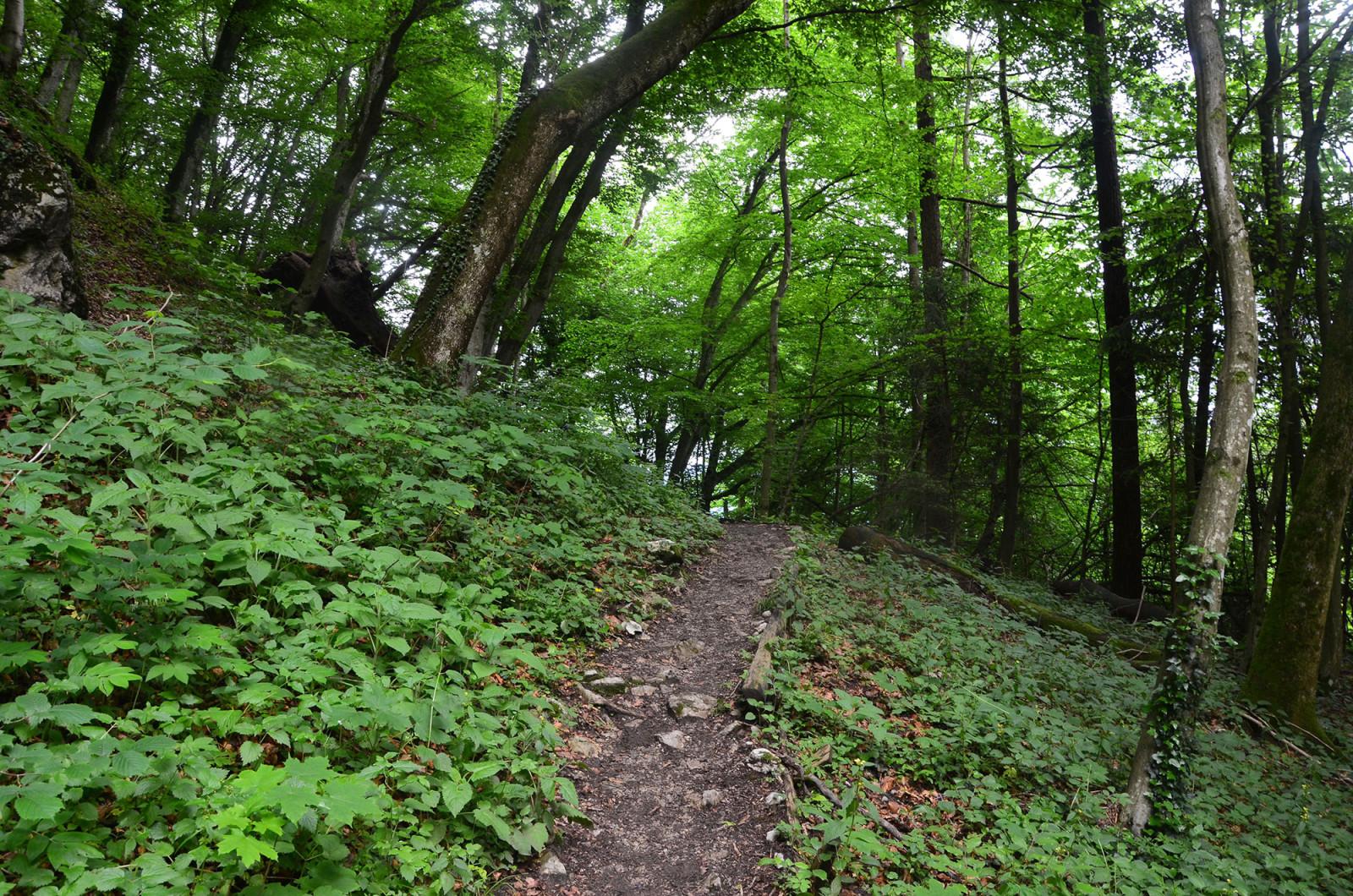 Der Weg zur Ruine Thürndl führt durch den Wald.