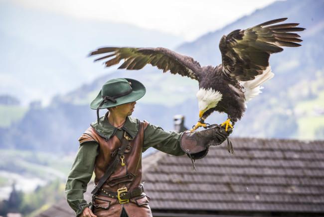 Greifvögel-Schau auf der Burgen Hohenwerfen