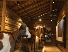 Talmuseum Grossarl 03