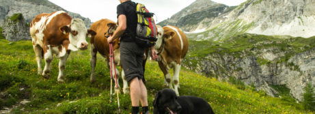 Wandern_Hund