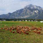 Hühnermobil mit Blick auf den Untersberg