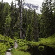 Der Weg schlängelt sich durch den Rauriser Urwald.