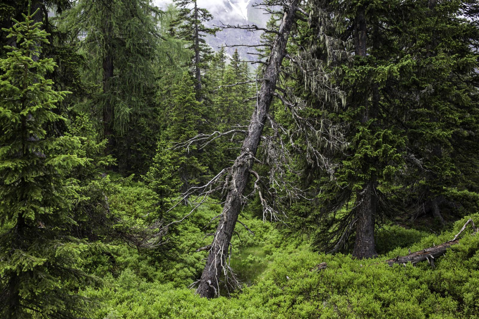 c TVB Rauris/Florian Bachmeier Ein uralter Baumbestand prägt das Erscheinungsbild.