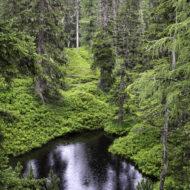 Bei Regen hat der Rauriser Urwald echten Dschungelcharakter.