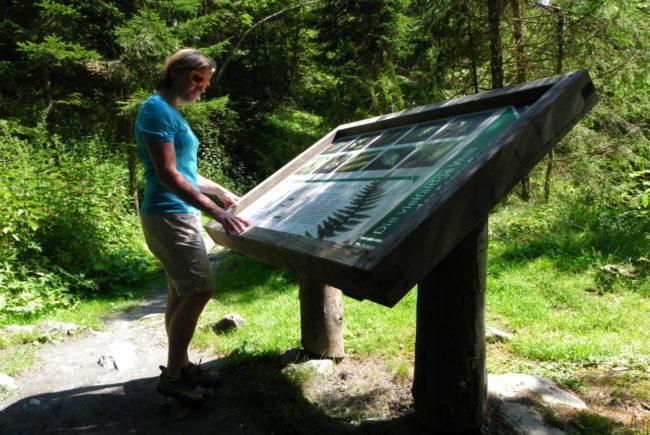 Schautafeln entlang des Lehrwegs erklären den Lebensraum Bach.
