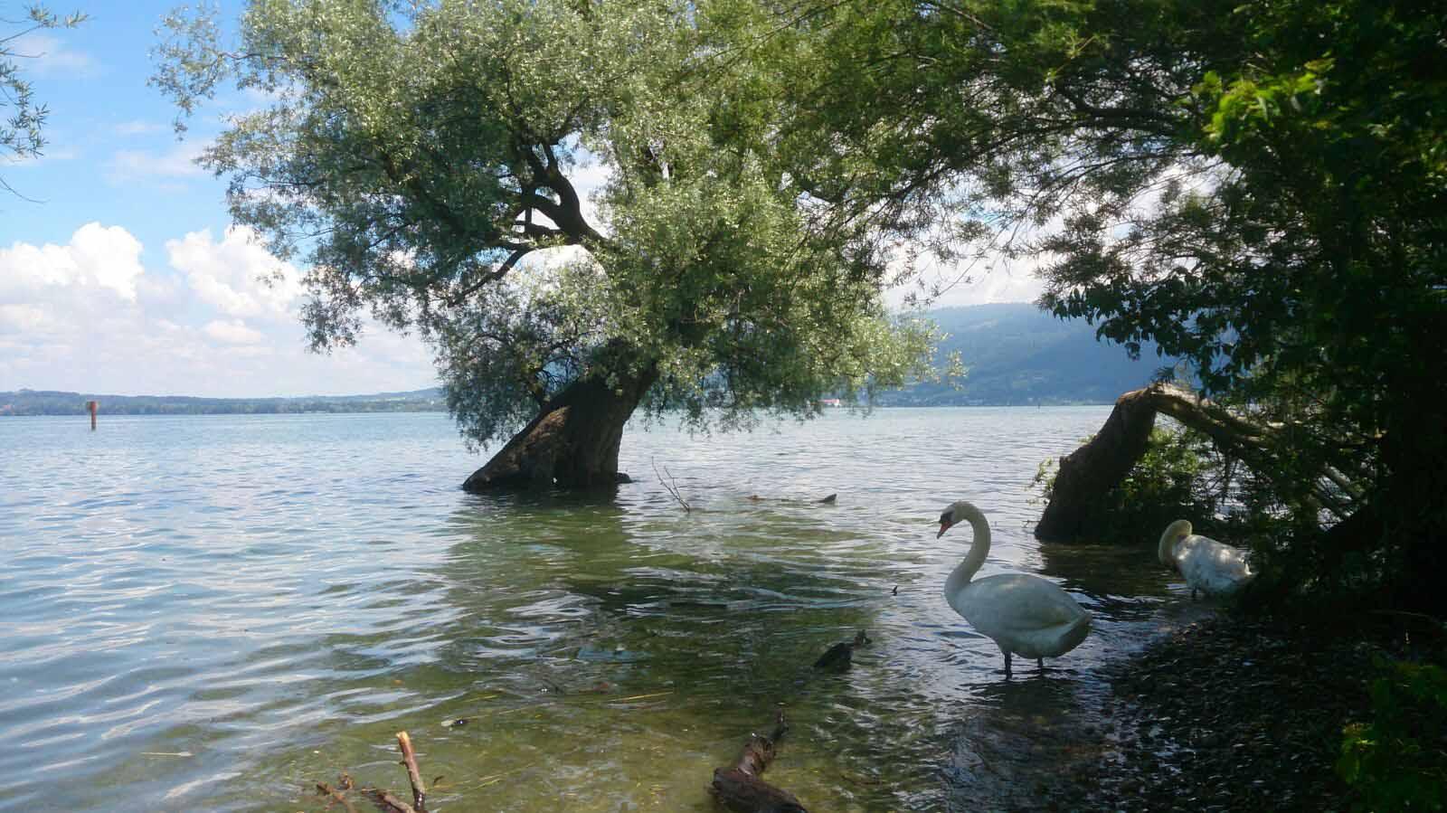 in den See.