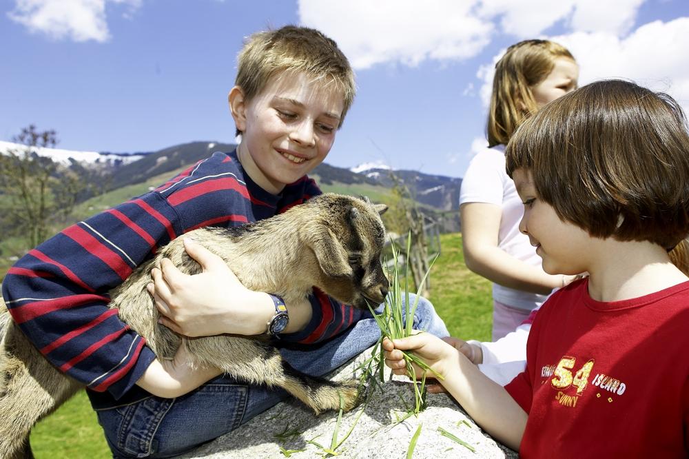 Kinderhotel Felben - der dazugehörigen Bauernhof ist mehr als ein Streichelzoo