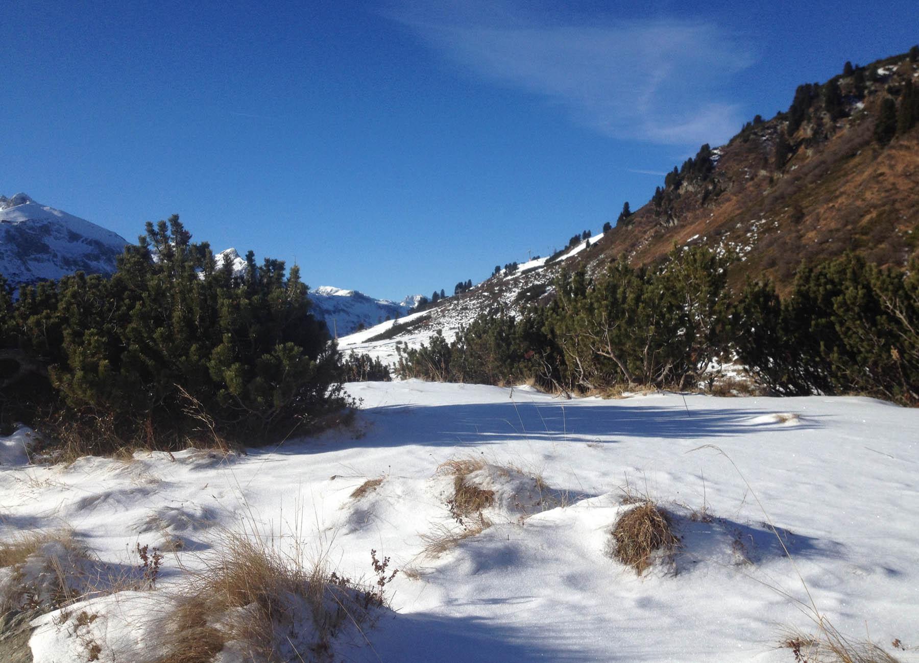 Novembertag am Tauern - Latschen und Schnee ...