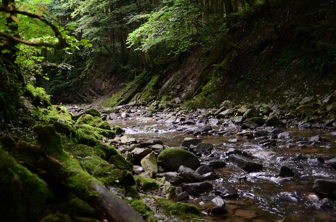 Bach mit bemoosten Wurzeln und Steinen