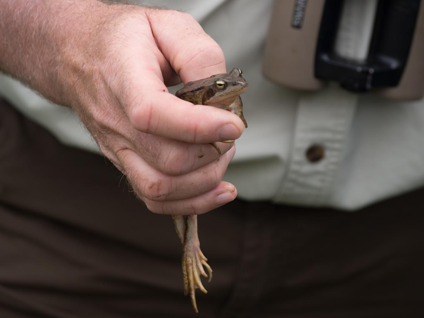 Der Frosch nahm das Fotografieren gelassen.