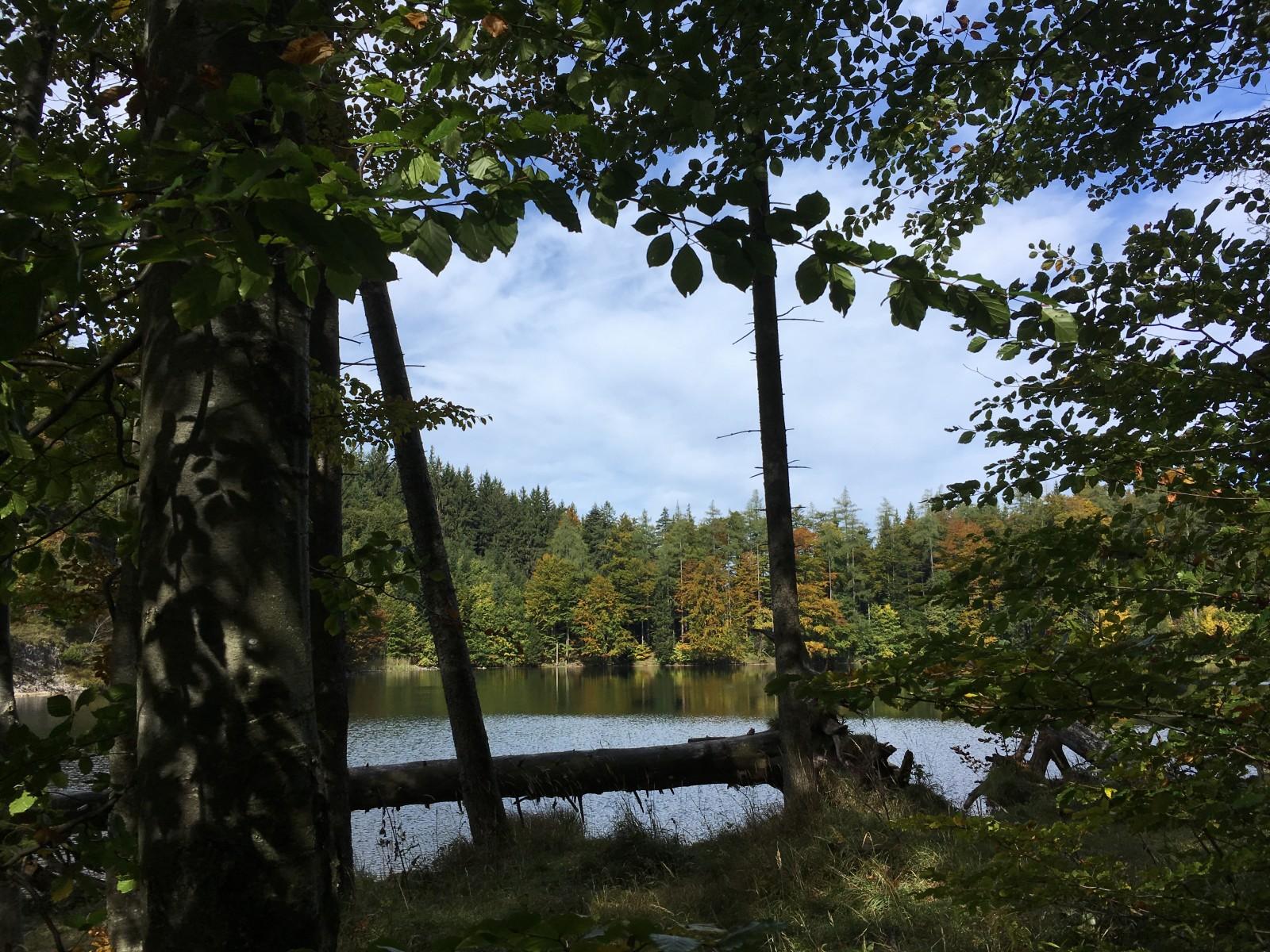 Herbstliche Farben prägen das Bild